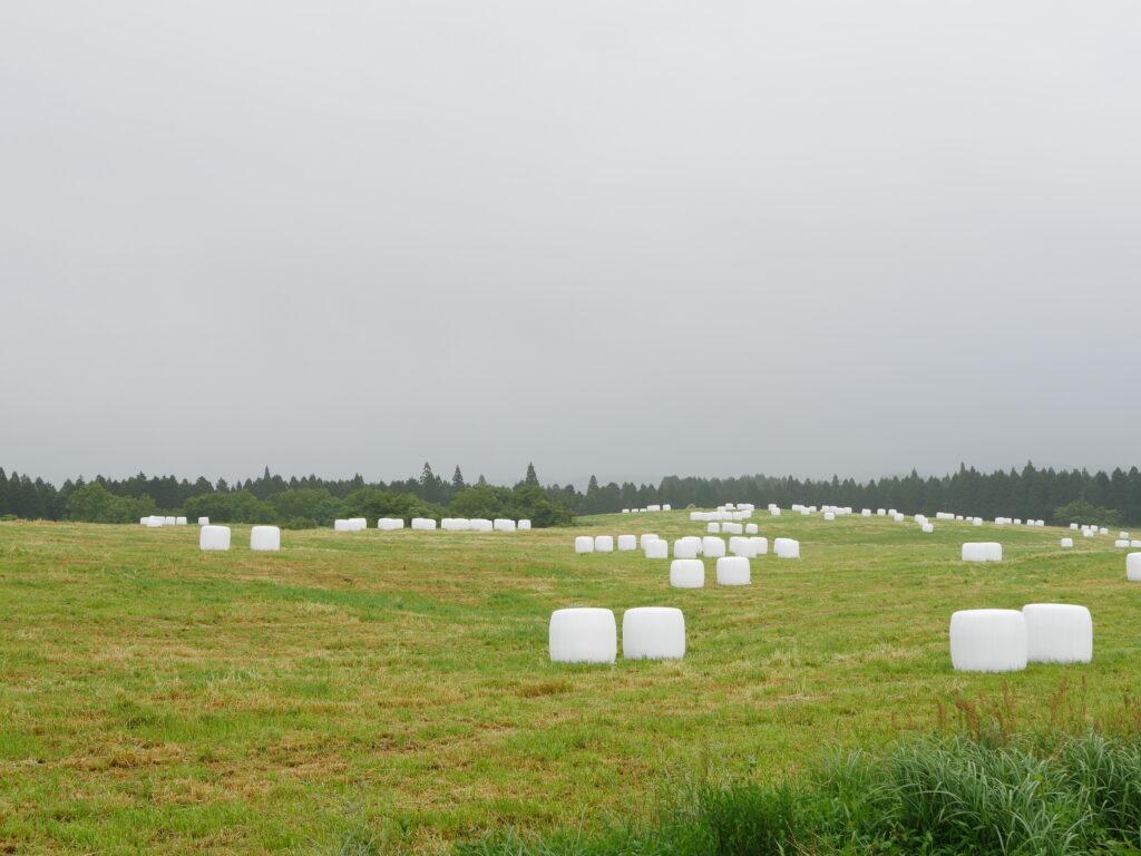 阿蘇くじゅう国立公園 牧草地帯