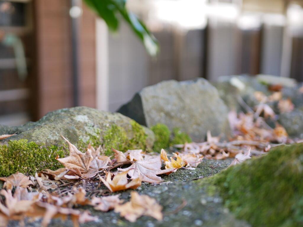 秋は日本の季節のなかで大好きです
